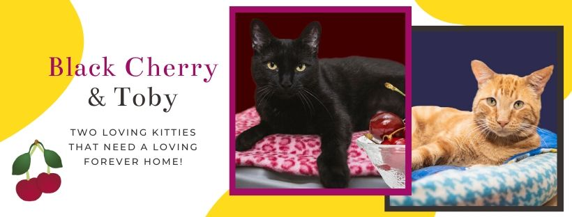 Black Cherry and Toby - Two Special Kitties Looking For A Forever Home