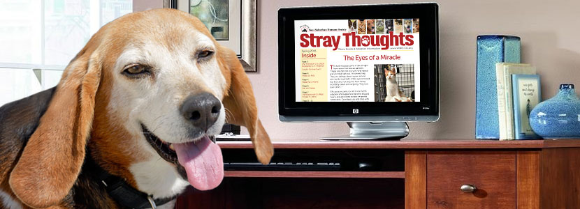 Stray Thoughts Newsletter - Spring 2016
